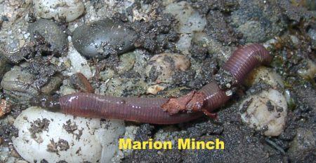 Die Präparate von die Würmer für die Schwangeren